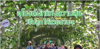 ชมเต็มๆ อุโมงค์ผักที่ยาวสุดในไทย...แถมวิธีปลูกให้สวยนานๆ