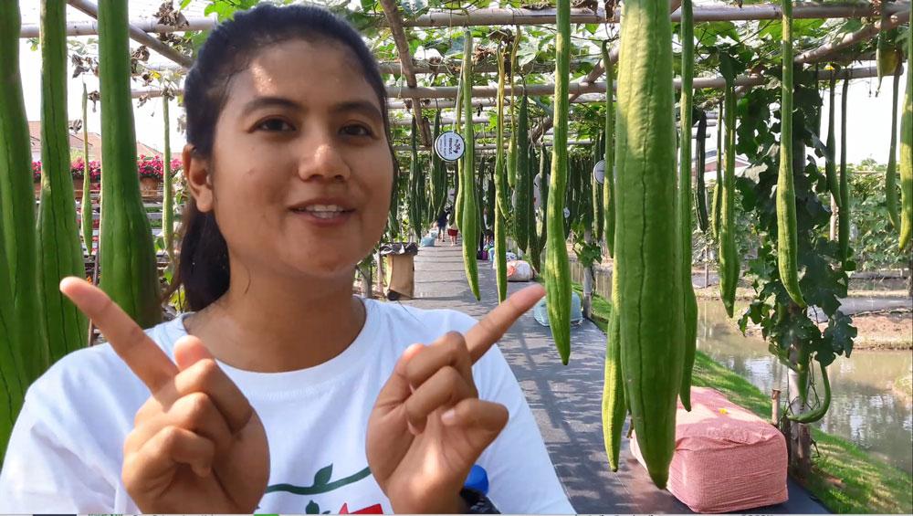 คนนี้ล่ะ...คุณผึ้ง คนรุ่นใหม่หัวใจเกษตรที่เรียนจบด้านพืชไร่ มาทำงานสร้างสรรค์อุโมงค์ผักแห่งความสุข