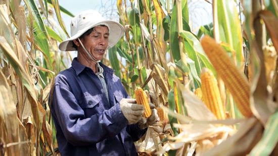 ซินเจนทา ประกาศแผนความยั่งยืนธุรกิจปี 62 สอดรับองค์การสหประชาชาติ มุ่งสร้างอาหารปลอดภัยด้วยวิทยาศาสตร์และเทคโนโลยี