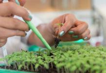ไททา แนะพรรคการเมืองชูนโยบายเกษตร GAP ใช้สารเคมีปลอดภัย แข่งขันในตลาดโลก