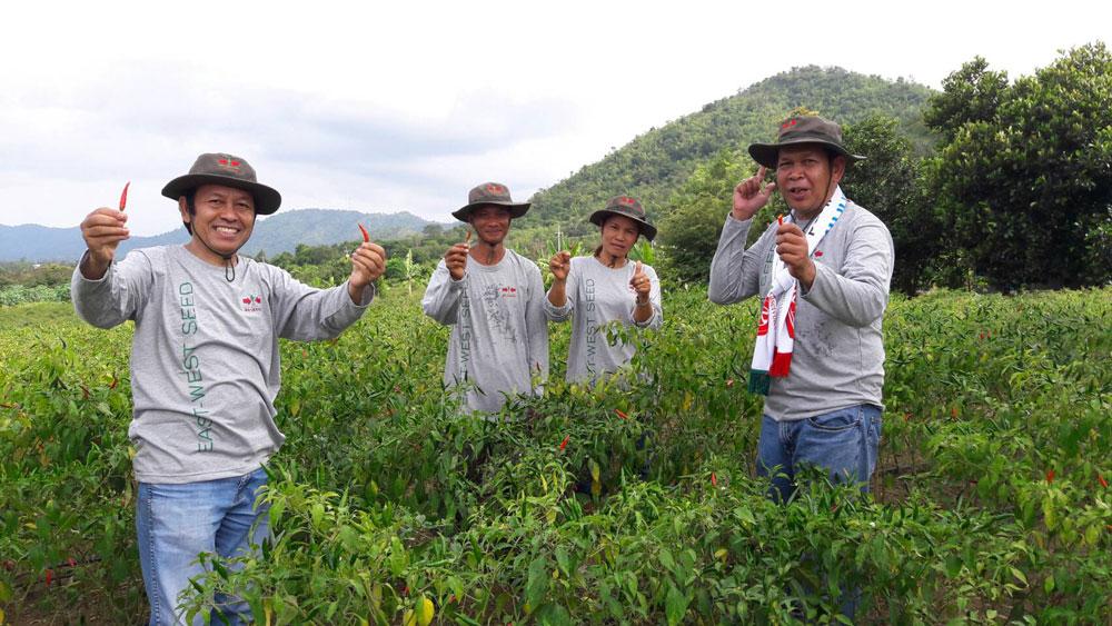ภาพนี้เดินทางมาพบเกษตรกรผู้ปลูกพริกขี้หนูที่ อ.ศรีสวัสดิ์ จ.กาญจนบุรี