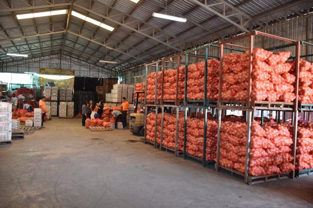 ลงพื้นที่แหล่งผลิตหอมหัวใหญ่ จ.เชียงใหม่ ปีนี้คุณภาพดี พร้อมลุยตลาดส่งออกญี่ปุ่น