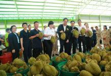 รับมือด่วน! ปี 2562 ผลผลิตผลไม้เพิ่มขึ้นทุกชนิด สั่งกำชับทุกภาคส่วนทุกพื้นที่เตรียมพร้อม
