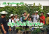 ห้องเรียนกลางสวน...เรียนปลูกไม้ผลในภาชนะ ที่ม.เกษตรศาสตร์