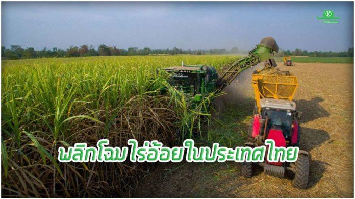 พลิกโฉมไร่อ้อยในประเทศไทย..สวทช.-ไอบีเอ็ม-มิตรผล จับมือนำ AI มาเพิ่มผลิตอ้อย