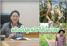 กรมส่งเสริมการเกษตร สู้ภัยแล้ง...แนะปลูกพืชใช้น้ำน้อยและหนุนสินเชื่อไร่ละ 2,000 บาท