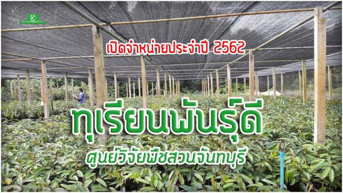 สั่งซื้อด่วน!!! ทุเรียนพันธุ์ดี ศูนย์วิจัยพืชสวนจันทบุรี ตั้งแต่ 11 มิ.ย. เป็นต้นไป