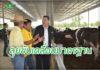 ปศุสัตว์ ลุยขับเคลื่อน Food Feed Farm มาตรฐานด้านอาหารคน สัตว์ และฟาร์ม