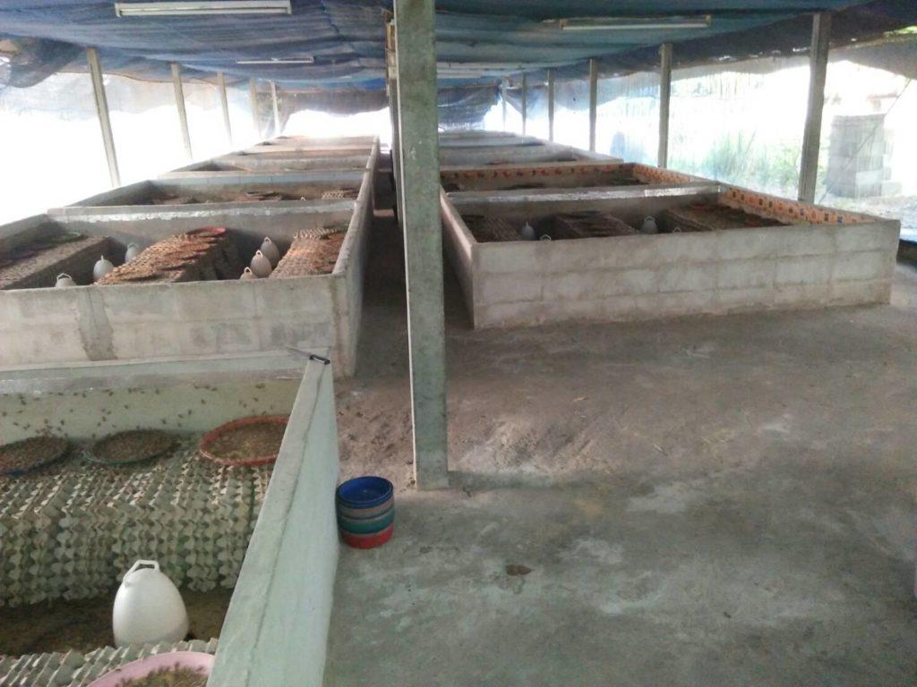 ฟาร์มจิ้งหรีด ทางเลือกเกษตรกรเสริมอาชีพ สร้างร้ายได้หลักแสนต่อปี
