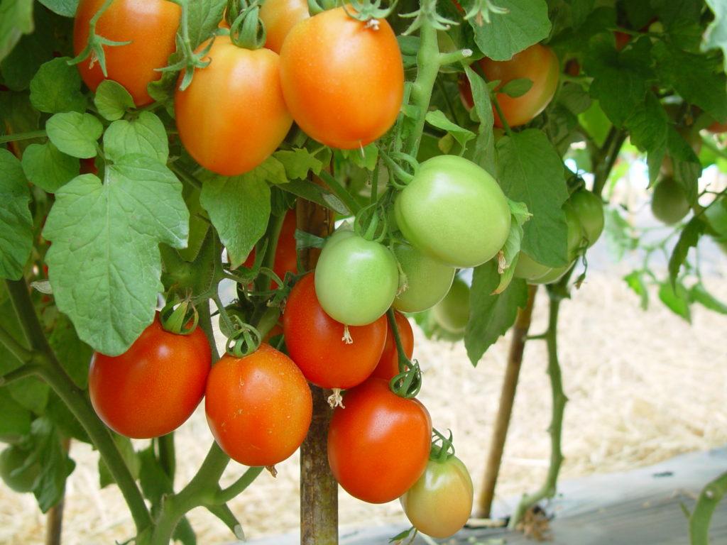 เกษตรฯ สานต่อโครงการ 5 ประสานสืบสานเกษตรทฤษฎีใหม่ ถวายในหลวง ปี 2562