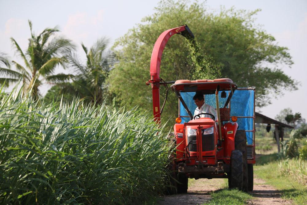 มีแปลงปลูกหญ้าและรถตัดหญ้าเป็นของตนเอง
