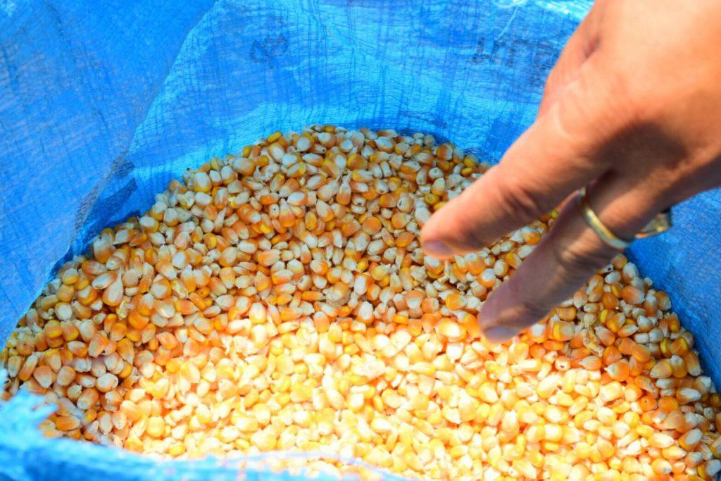ย้ำชัดๆ!! โครงการข้าวโพดหลังนา เกษตรกรขายตามจุดสหกรณ์ ได้กำไรชัวร์