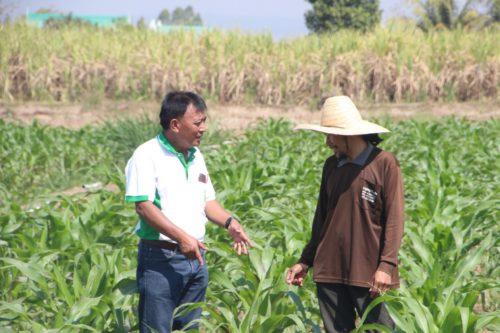 เจ้าหน้าที่ของกรมส่งเสริมการเกษตรติดตามดูแลเกษตรกรอย่างต่อเนื่อง
