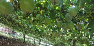 ลดไร่หมุนเวียน ทำเกษตรเป็นมิตรสิ่งแวดล้อม คนอยู่ร่วมกับป่า...ป่าก็จะกลับมาเอง
