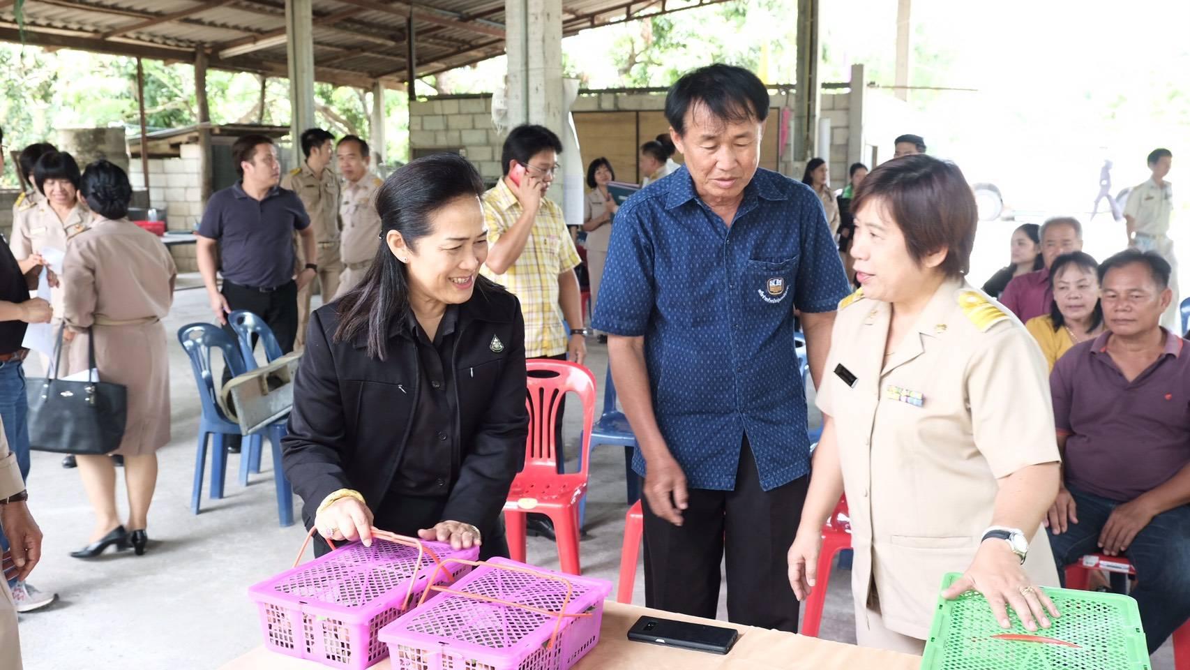 กรมส่งเสริมการเกษตร ลงพื้นที่ลำไย จ.ลำพูน จับมือไปรษณีย์ไทย