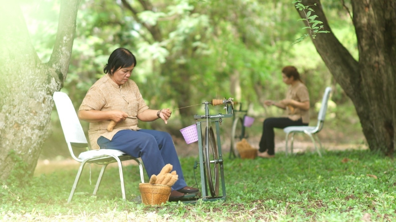 """ตากฟ้า 6 ฝ้ายเส้นใย """"สีน้ำตาลธรรมชาติ"""" พันธุ์แรกของไทย"""