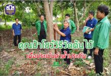คุณป้าโชว์วิธีวัดขนาดต้นไม้เพื่อประเมินค่าค้ำประกัน...ธ.ก.ส.จัดให้ดูเต็มๆ