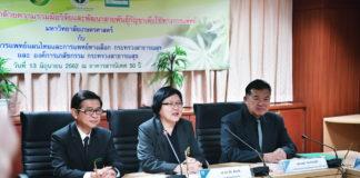 วิจัยและพัฒนากัญชาสายพันธ์ไทยเพื่อใช้ทางการแพทย์ ม.เกษตรฯ เริ่มแล้ว