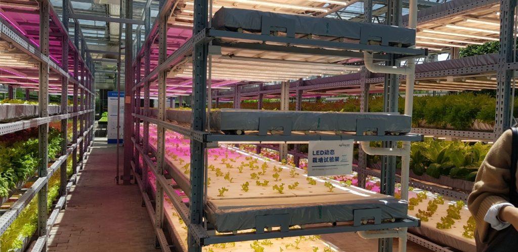 """เปิดโลกทัศน์คัดเกษตรกรผลงานเด่นร่วมศึกษาดูงานเทคโนโลยีการผลิตสินค้าเกษตรที่ทันสมัย ในงาน """"ปักกิ่ง เอ็กซ์โป 2019"""" ณ สาธารณรัฐประชาชนจีน"""