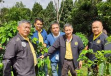 """มาอีกแล้วศัตรูพืชตัวใหม่ล่าสุด """"มอด""""ระบาดหนักไร่กาแฟอะราบิกาแหล่งผลิตสำคัญภาคเหนือ"""