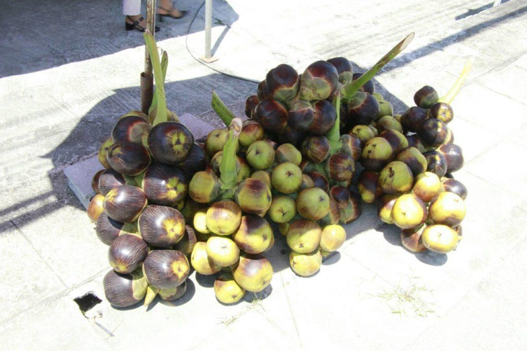 """""""กรมเจรจาฯ"""" จับมือสภาเกษตรกรแห่งชาติ ล่องใต้ติวเข้มเกษตรกร พร้อมดันสินค้าเกษตรไทยสู่ตลาดโลกด้วยเอฟทีเอ"""