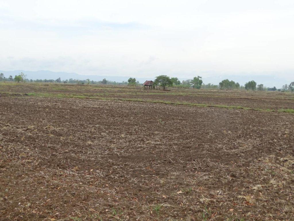 กรมส่งเสริมการเกษตรสั่งการทุกจังหวัดตั้งวอร์รูมสำรวจพื้นที่ประสบภัยแล้ง พร้อมแจ้งเตือนเกษตรกรปรับปรุง/ขึ้นทะเบียนเกษตรกรก่อนเกิดความเสียหาย