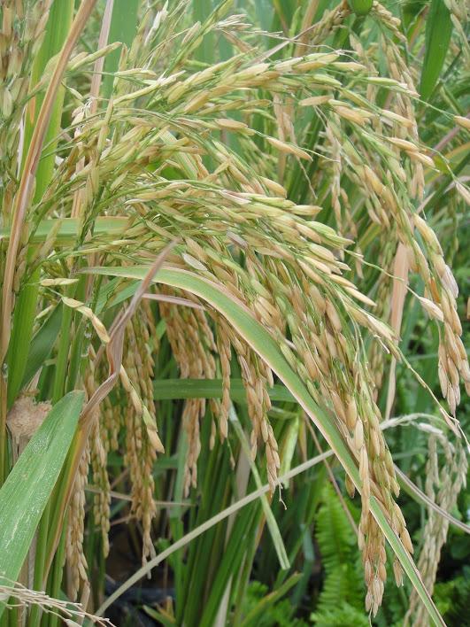 เกษตรฯ กรุยทางส่งออกข้าว ผลไม้ ไทยไปแดนมังกรฉลุย ปกป้องตลาดส่งออกมูลค่ากว่า 2 หมื่นล้านสำเร็จ
