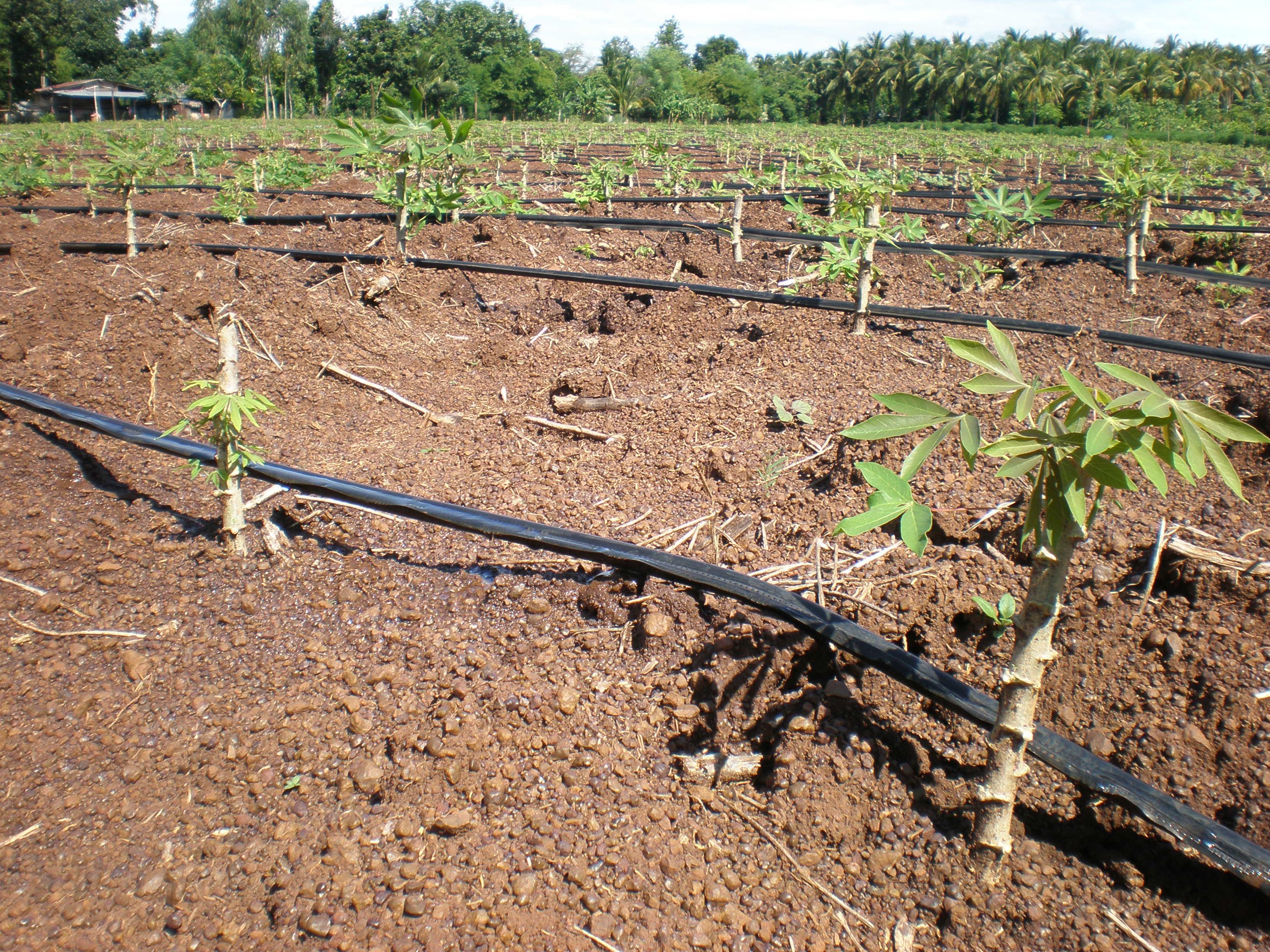 อบรมระบบน้ำเพื่อการเกษตร ทำง่าย ใช้ได้จริง 21 ก.ค.62 ม.เกษตรศาสตร์ บางเขน