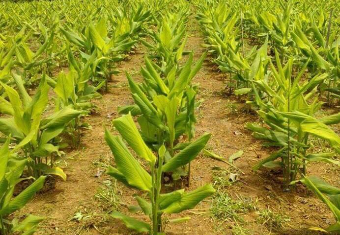 สมุนไพรไทยผงาดขึ้นแท่นตลาดระดับโลกส่งออกแสนล้าน เกษตรฯเร่งยกระดับคุณภาพมาตรฐานรองรับความต้องการของตลาด