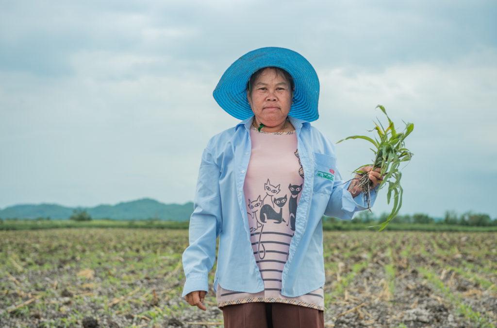 สมาคมฯ นวัตกรรมเพื่อการเกษตรไทย จับมือภาครัฐ ติดอาวุธเกษตรกรในฤดูปลูกข้าวโพด จัดการหนอนกระทู้ข้าวโพดลายจุดให้อยู่หมัดด้วยองค์ความรู้ที่ถูกต้อง