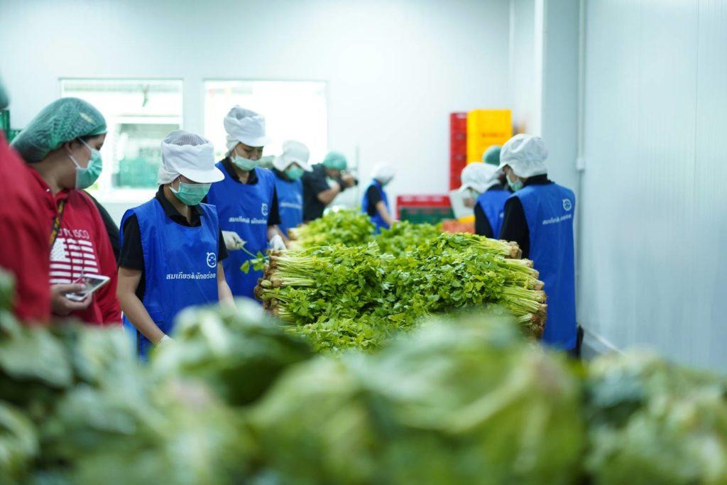 แม็คโคร ดันเกษตรกรปลูกผักปลอดภัย หนุนพัฒนาแล็บตรวจสารตกค้างตั้งแต่ฟาร์ม ย้ำความมั่นใจช่วงเทศกาลกินเจ