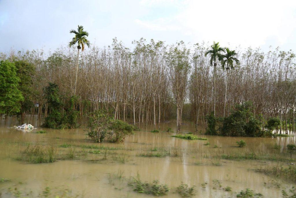 """กรมส่งเสริมการเกษตรแนะวิธีดูแลและฟื้นฟูพืชหลังประสบอุทกภัยจากพายุ """"โพดุล"""" และ """"คาจิกิ"""""""