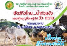 วอนผู้ใจบุญซื้อหญ้าเลี้ยงวัว ควาย ยโสธร-อุบลราชธานี