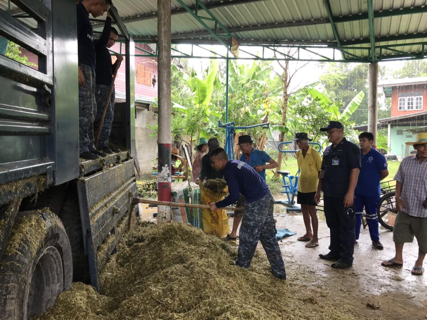 กองทัพอากาศ ช่วยลำเลียงหญ้าเพื่อเป็นอาหารสัตว์ในพื้นที่ประสบอุทกภัย จ.ยโสธร