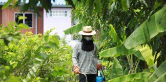 เครือข่ายราชบุรีโมเดล ร่วมหน่วยงานรัฐ ชูต้นแบบเกษตร GAP ใช้เคมีไร้สารตกค้าง