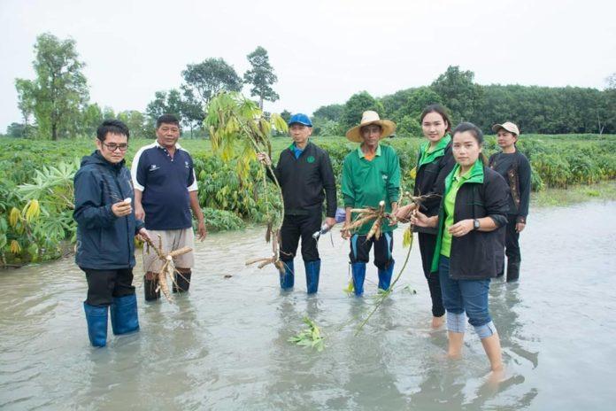 เกษตรฯ จัด 5 โครงการ...เร่งฟื้นฟู เยียวยา เกษตรกรผู้ประสบภัยฝนทิ้งช่วงและอุทกภัยปี 2562