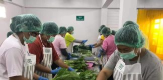 กรมส่งเสริมการเกษตรหนุนนโยบายตลาดนำการเกษตร ดันกลุ่มผักแปลงใหญ่ลำพูนส่งห้าง Modern trad