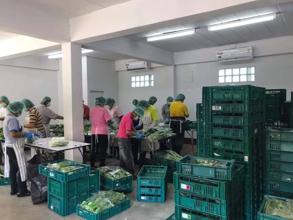 กรมส่งเสริมการเกษตรหนุนนโยบายตลาดนำการเกษตร ดันกลุ่มผักแปลงใหญ่ลำพูนส่งห้าง Modern trade