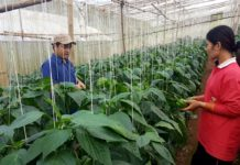 """""""โครงการหลวงมุ่งผลิตพืชในระบบปลอดภัย และพัฒนาชีวภัณฑ์ที่เป็นมิตรต่อสิ่งแวดล้อมทดแทนสารเคมี"""""""