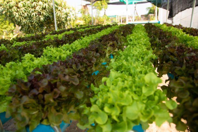 กลุ่มมิตรผลเผยดัชนีความสุขชาวไร่อ้อยในโครงการทำตามพ่อ ปลูก เพ(ร)าะ สุข สูงถึง 80% มุ่งสานต่อทุกมิติของความสุขให้เกษตรกรไทยพึ่งพาตนเองได้อย่างยั่งยืน
