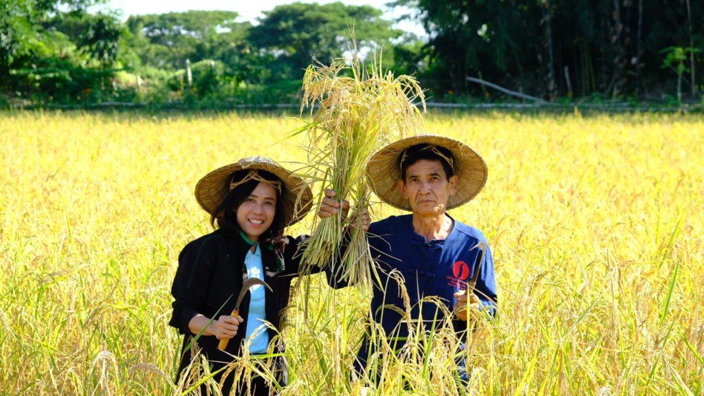 กรมส่งเสริมการเกษตรเตือนภัยเกษตรกรเฝ้าระวังการระบาดของโรคไหม้ข้าว