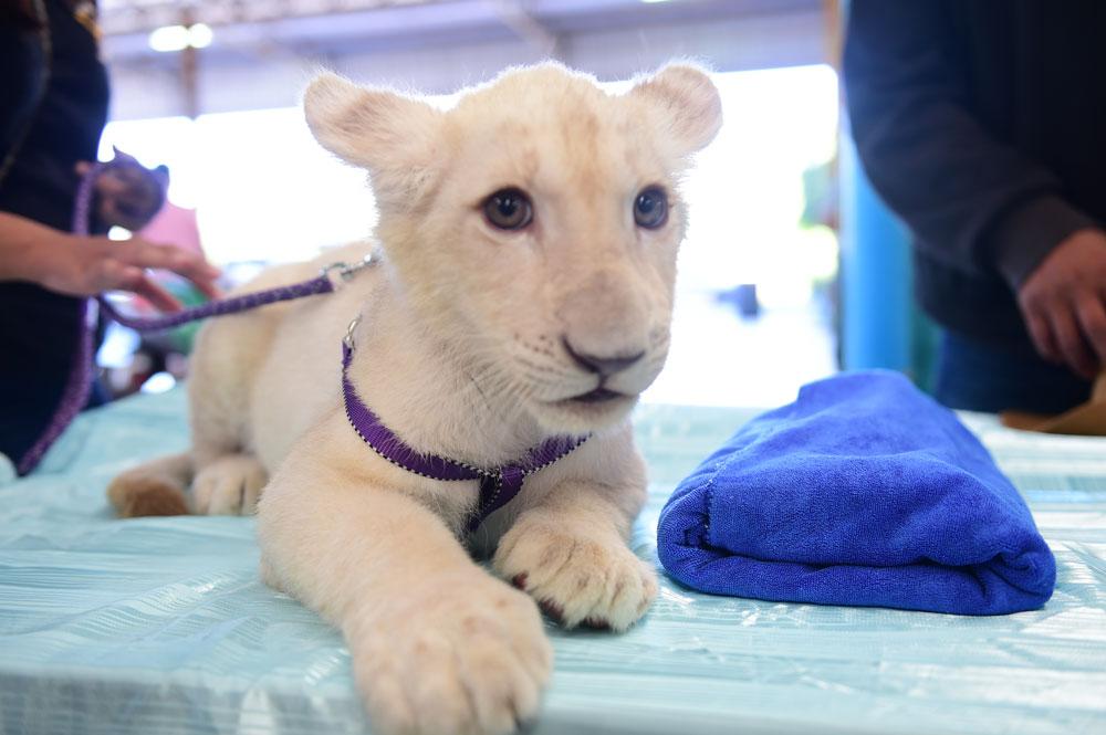 มหกรรมสัตว์เลี้ยงแห่งประเทศไทย ครั้งที่ 15