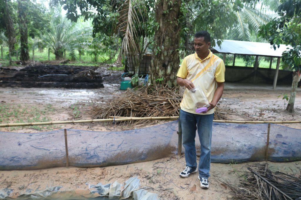 ปลาซิว เกษตรกรลำทับเลี้ยงในสวนปาล์มน้ำมัน เป็นรายได้เสริมในช่วงราคาปาล์มตกต่ำ