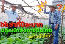 ให้เช่าที่ดินปีละบาทเดียว แต่ขอให้ปลูกผักได้สวยงามเพื่อส่งการบินไทย...