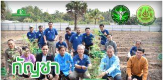 """ต้นแรกปลูกแล้ว """"กัญชาลงสู่ดินถูกกฎหมาย"""" โดยเกษตรกรไทย พร้อมเผยแพร่ความรู้ในปี 63"""