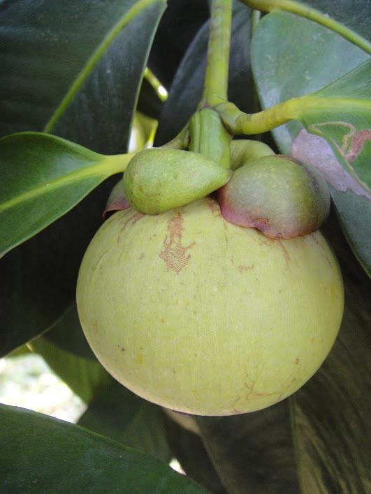 รุกสร้างความเข้าใจเงื่อนไขส่งออกผลไม้ไปจีนต้องมี 2 G