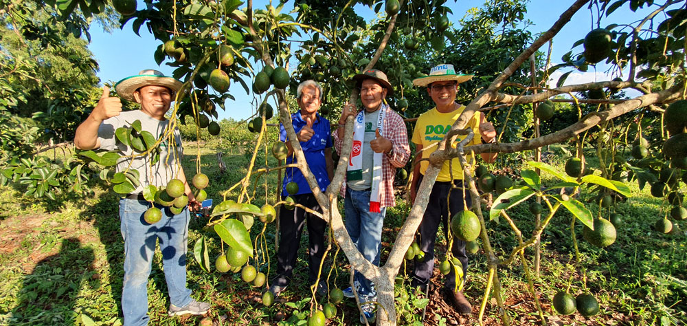 นายธนากร โปทิกำชัย รักษาการผู้อำนวยการศูนย์ส่งเสริมและพัฒนาอาชีพการเกษตรจังหวัดตาก(เกษตรที่สูง) ยืนยันว่าอะโวคาโดมีอนาคตที่น่าสนใจ
