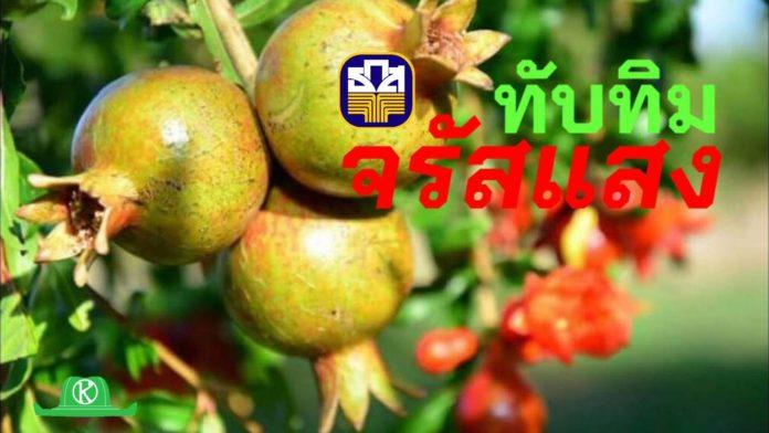 ธ.ก.ส.ชวนชิมทับทิม