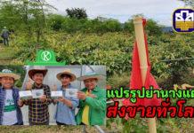 """ปลูกย่านางแดง แปรรูปเป็น """"ชาทีมิน"""" ส่งขายทั่วโลก..เกษตรกร ธ.ก.ส. ทำได้แล้ว"""
