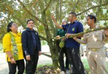 กรมส่งเสริมฯ เกาะติดสถานการณ์ไม้ผลภาคตะวันออก และเตรียมป้องกันภัยแล้งในสวนไม้ผล จ.จันทบุรี